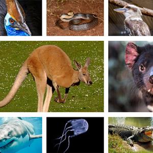 Amazing Australian Animal Facts